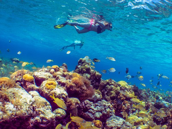 El Cielo Cozumel snorkel