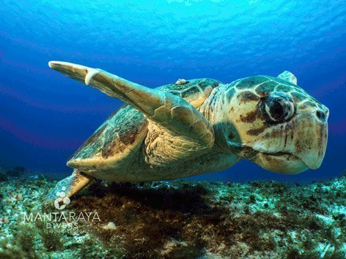 Sea Turtle Cozumel NE