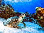 seaturtlecoz7-16.jpg