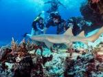 kramers-jackson-sharknursecoz8-16.jpg